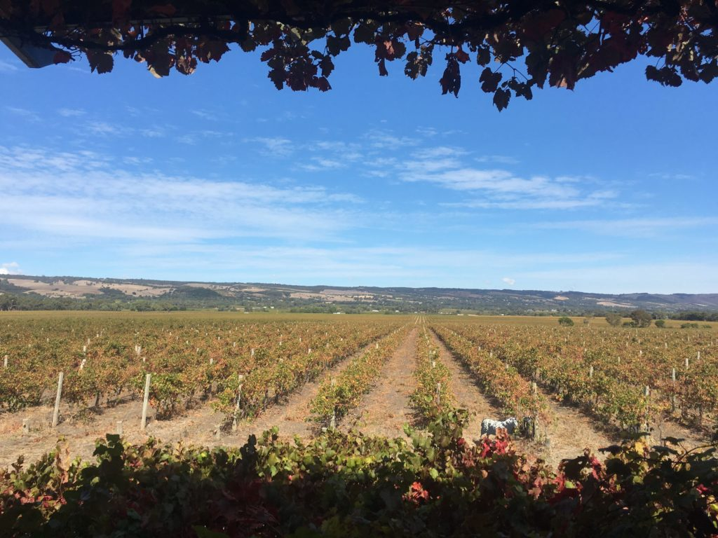 barossa valley adelaide review mclaren vale winery tour vacation in australia road trip