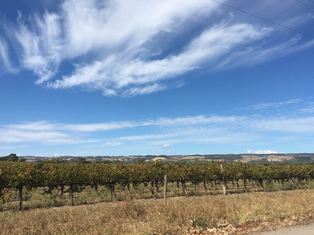 guide to visiting the barossa valley adelaide day trip car hire road trip cheap australian holiday destination long weekend itinerary