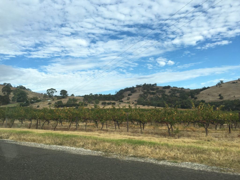 top day trips from adelaide weekend getaway australian holiday guide barossa valley lookout view winery