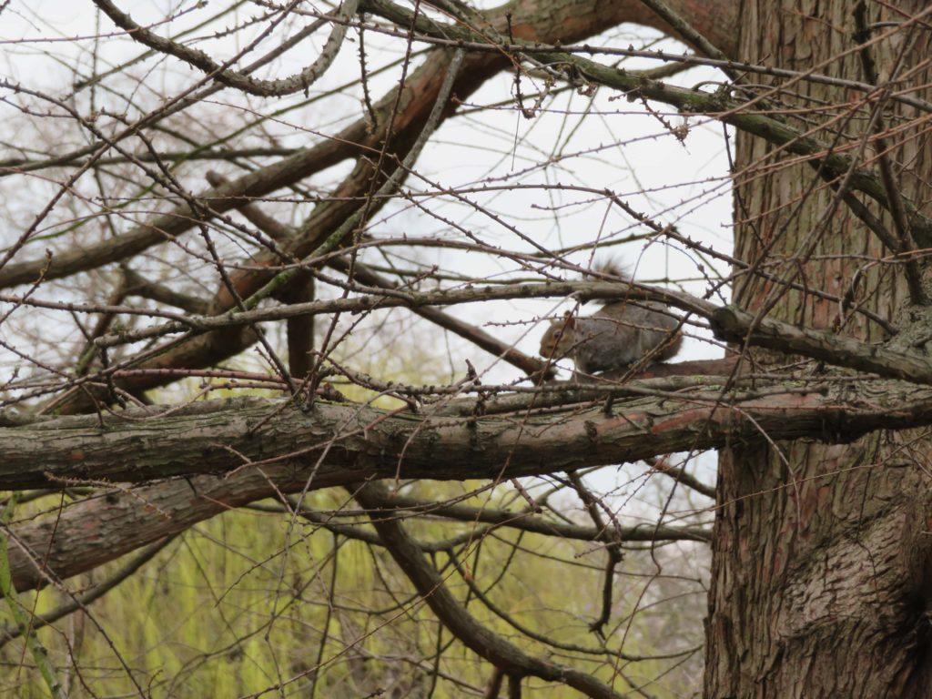London squirrel st james park best places to photograph squirrels park review