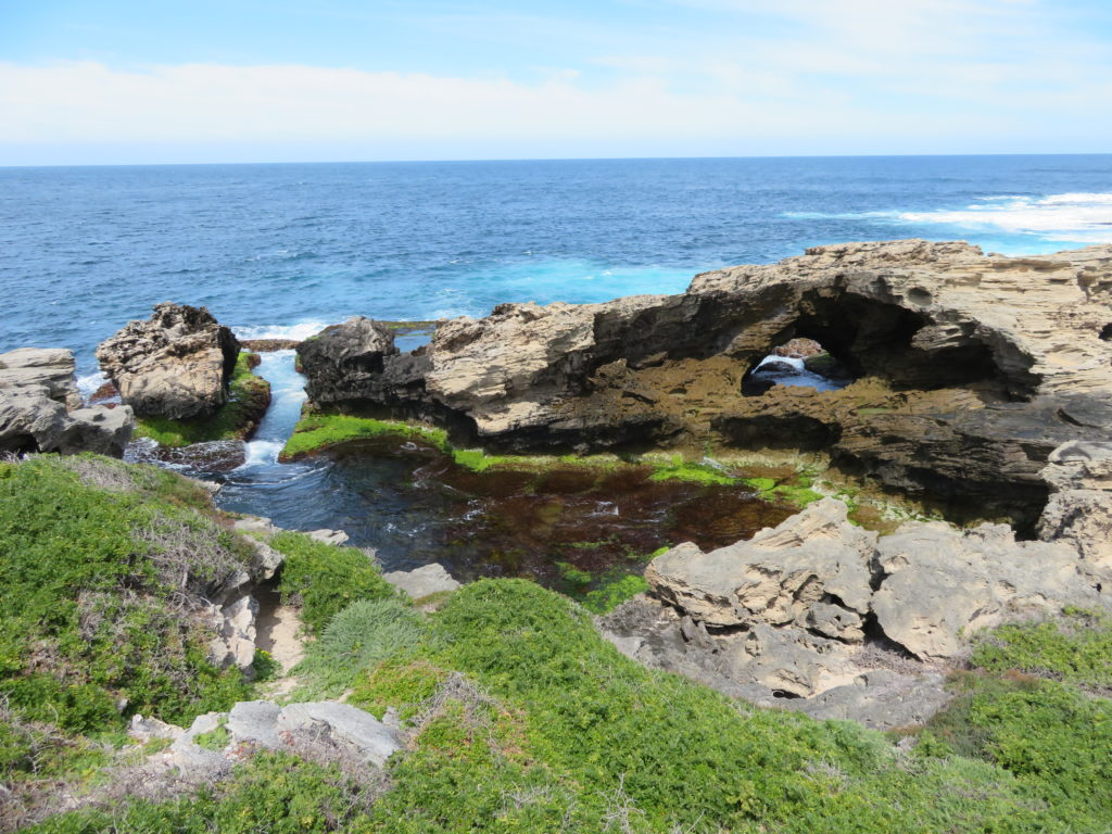 cape vlamingh rottnest island day trip from perth itinerary