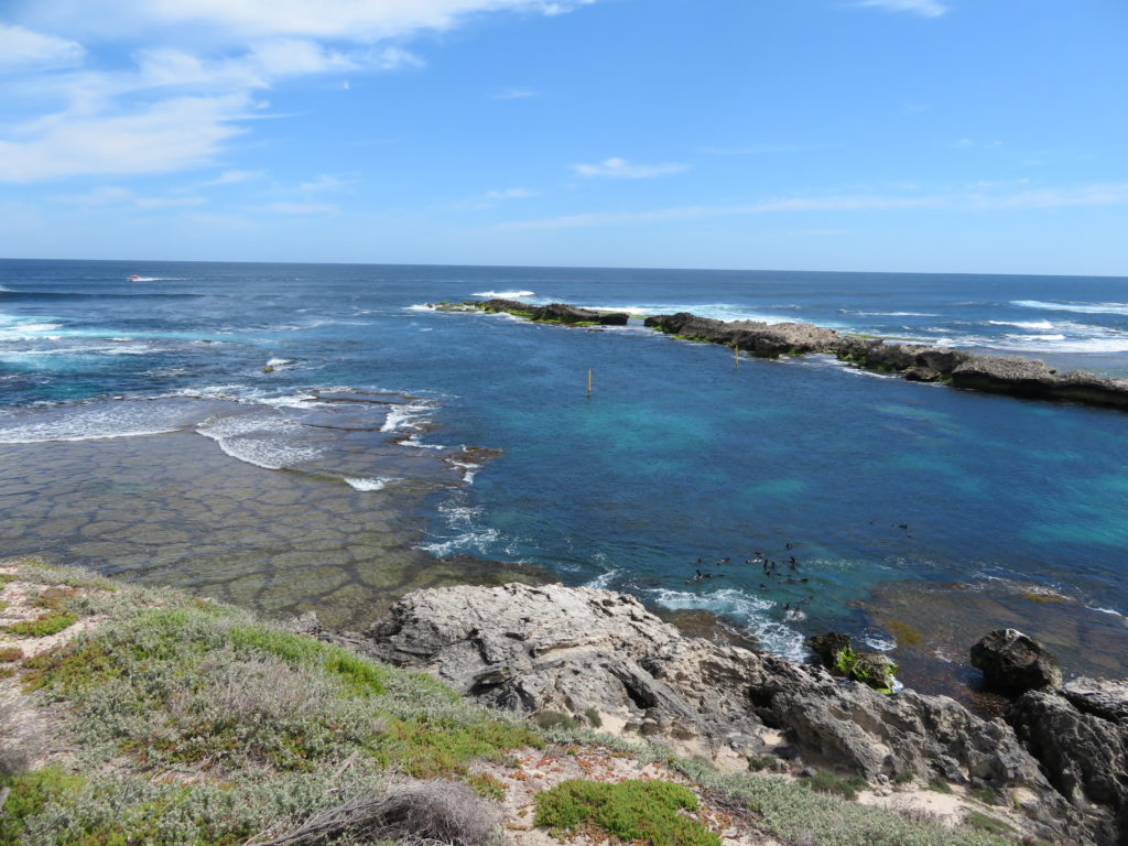 cathedral rocks rottnest island things to see and do sea lion pristine beaches