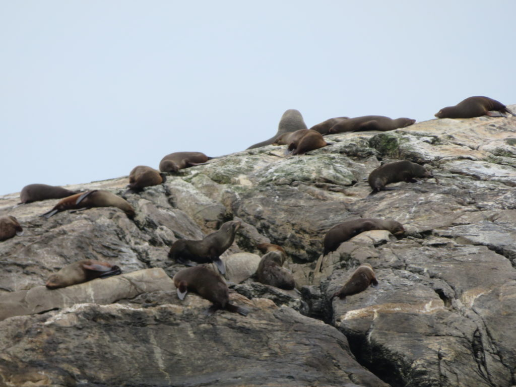 new zealand south island doubtful sound day trip real journeys review sea lions