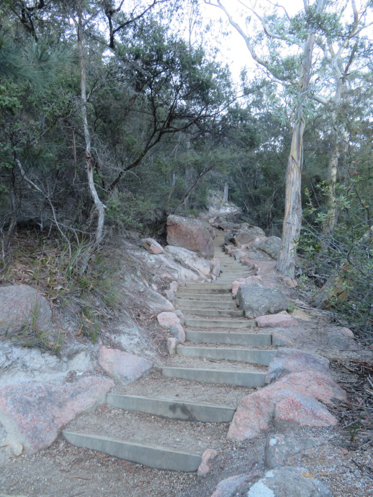 wineglass bay steps to wineglass beach lookout circuit walking trail 1000 steps how to get there is it worth it tasmania