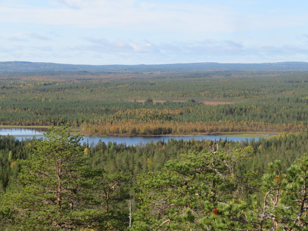 finnish forest half day trip from Rovaniemi viewpoints lookout best photo spots itinerary guide