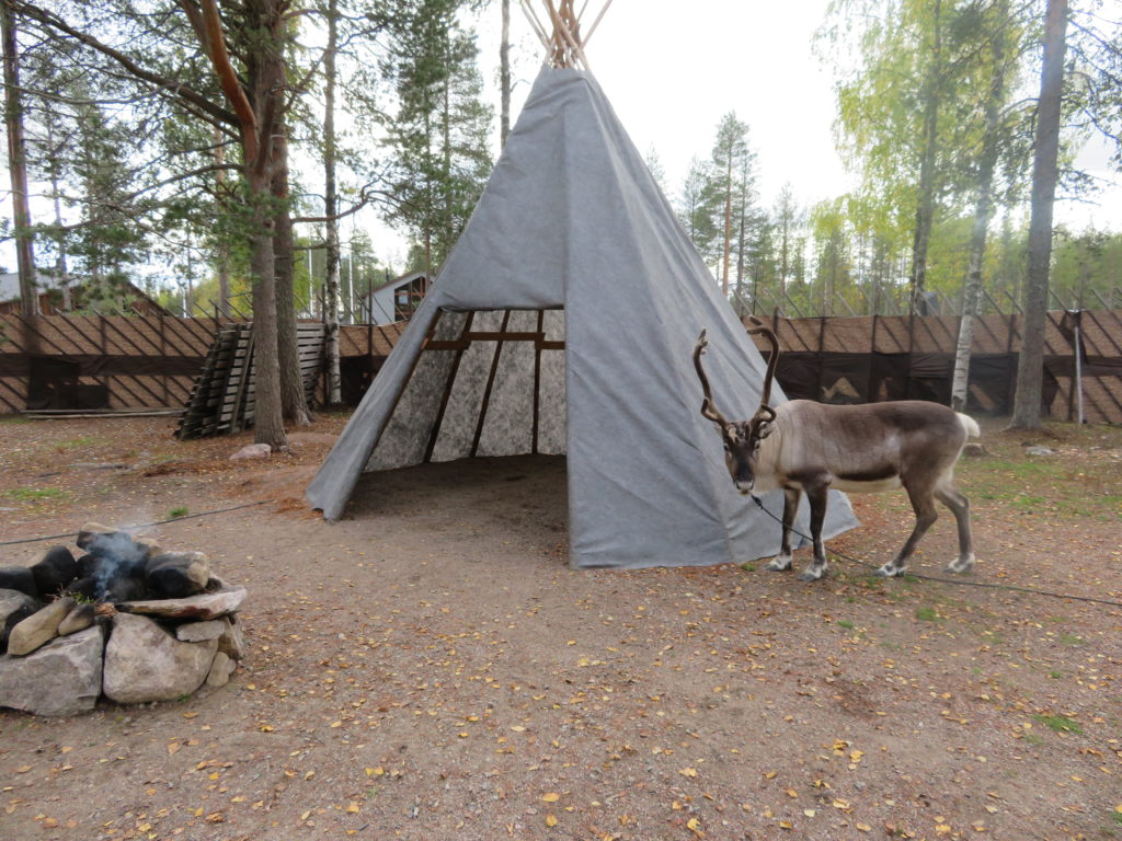 meet a reindeer feed and pat them at santa claus village in rovaniemi lapland northern finland