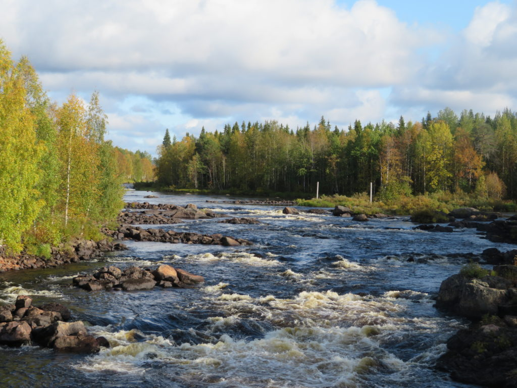 Day trip to the finnish forest from Rovaniemi photography tour macro september autumn hiking trails 15 minute drive outside town