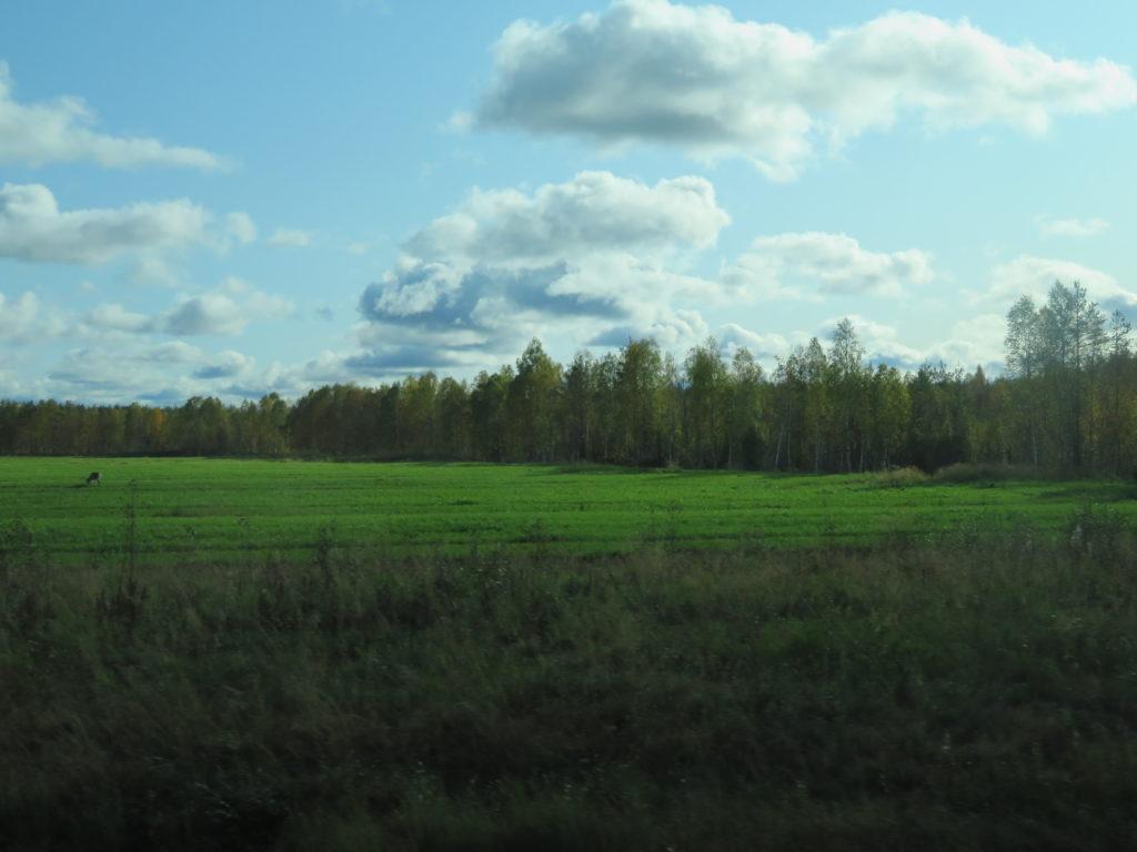 Finland in autumn rovaniemi reindeer