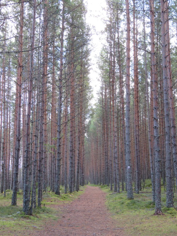 Lahemaa national park estonia viru bog walking trail things to see and do day trip from tallin