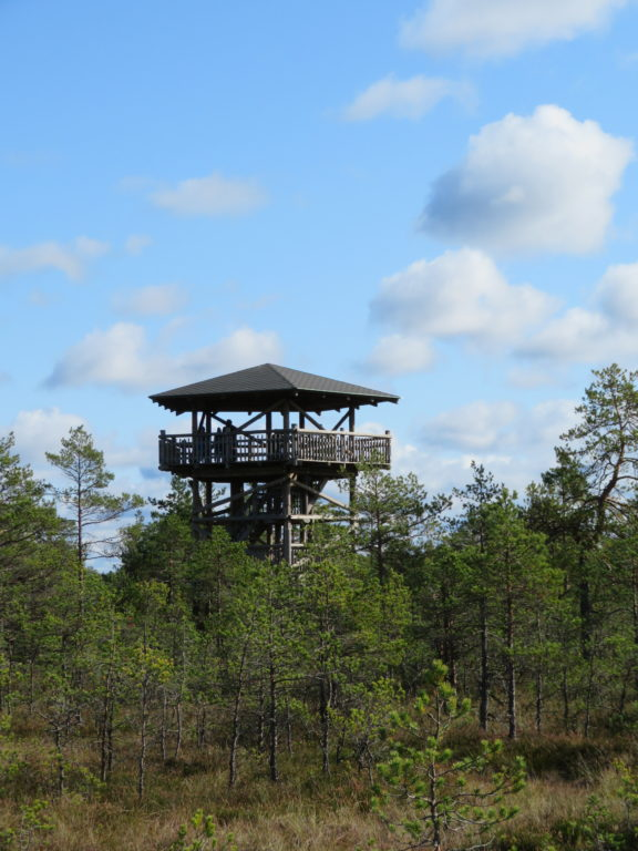 Viru bog observation tower lookout viewpoint estonia national park lahemaa day trip from tallin things to see and do walk through a bog