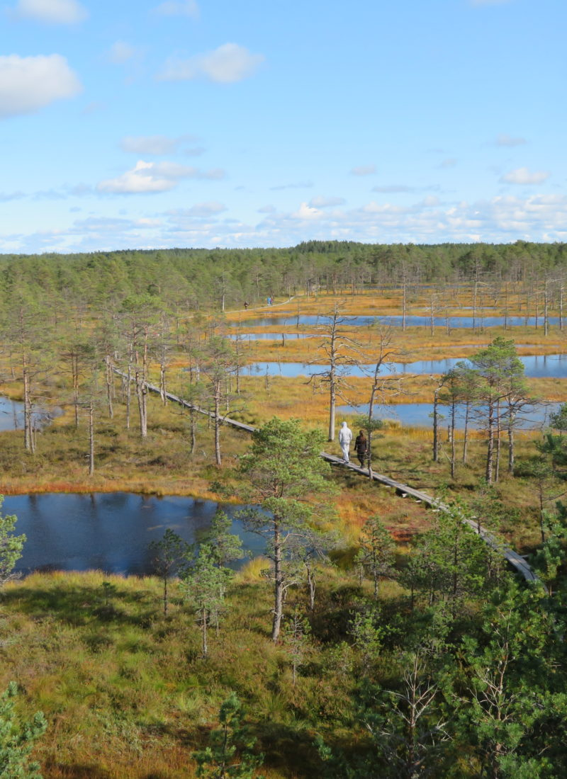 Viru bog Lahemaa national park estonia day trips from Tallin things to see and do view from the observation deck