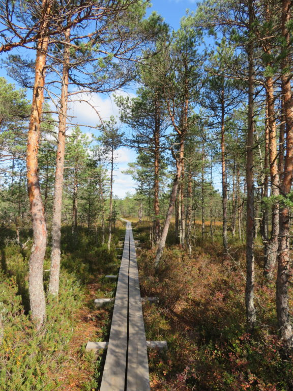 Viru bog Lahemaa national park estonia day trips from Tallin things to see and do view from the observation deck boardwalk wetlands duckboards walking trail hiking in estonia