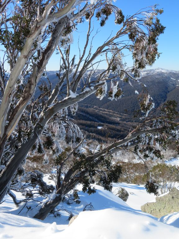 snowshoeing tour from Thredbo Village to Mount Kosciusko winter june july august september australian winter holiday snow